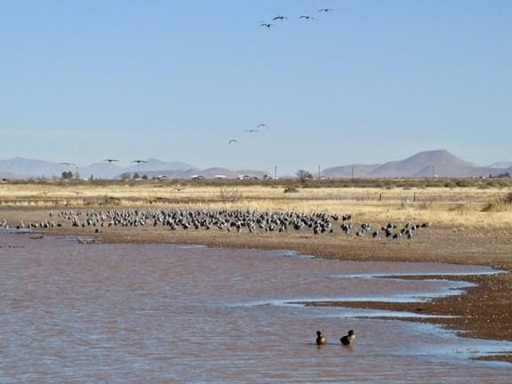 Willcox Arizona Area Attractions | Willcox / Cochise, AZ KOA