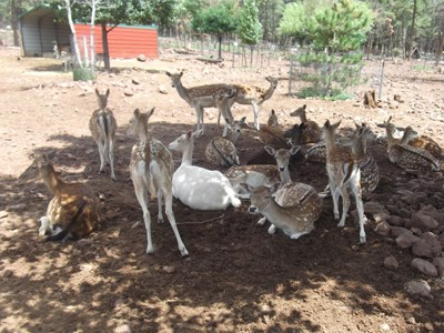 Grand Canyon Deer Farm