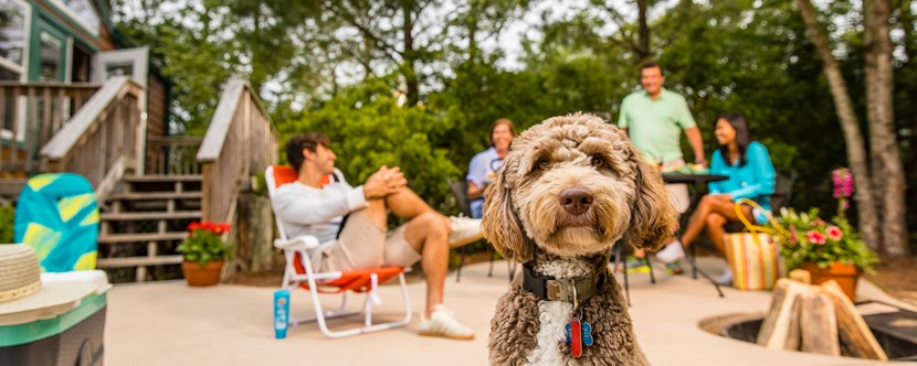 Pet-Friendly Lodging / Accommodation in Wilmington, NC